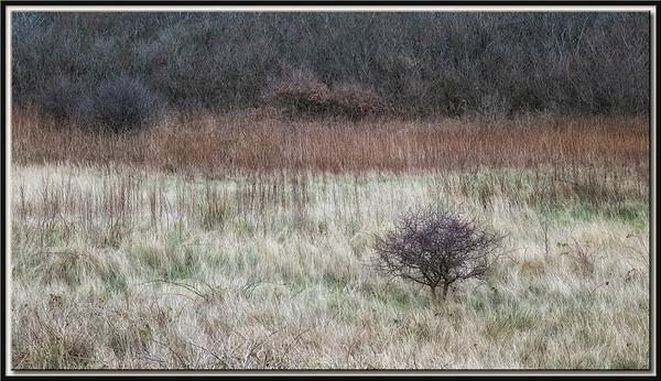 Sträucher-Landschaft hinter dem Deich