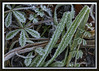 Ice Crystals and Grass
