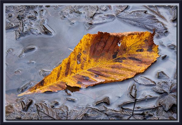 Floating in Mud