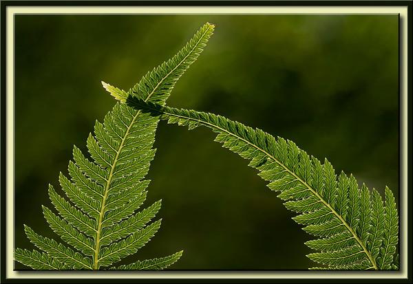 Crossing Leaves