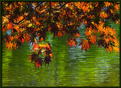 Zierahorn am Teich