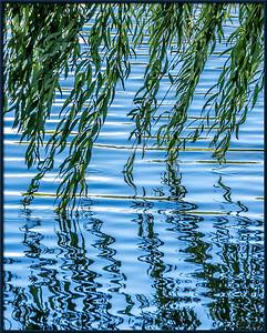 Weidenblätter am See