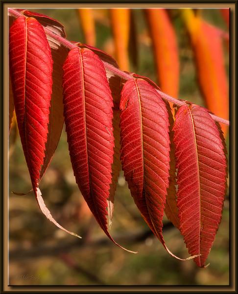 Feurige Blätter