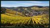 Weinstöcke im Herbst