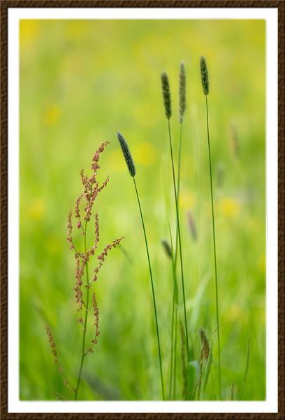 Grasses in Spring