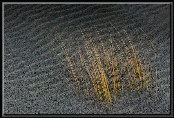 Dünengrass
