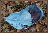 Farbverlauf im Blaukraut