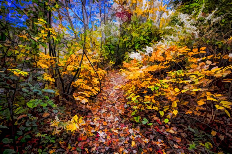 Fall on the Charles River Walk Waltham MA