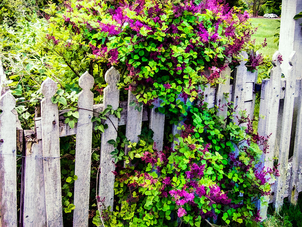 Provincetown Fence