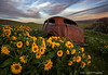 Abandoned Car in a Field of Balsamroot