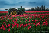 John Deere Sits in a Field of Tulips