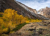 Gold Aspen McGhee Creek