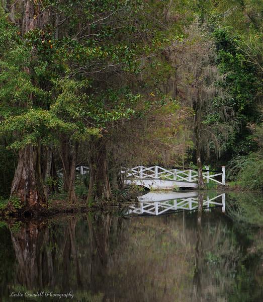 Magnolia Plantation Gardens, S.C.