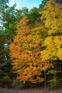 Fall foliage in Letchworth