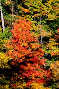 Fall foliage from east rim trail  in Letchworth gorge