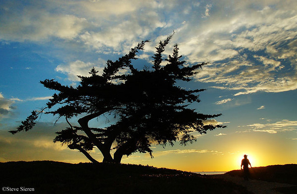 Cypress Man Silhouette, Carpinteria, California