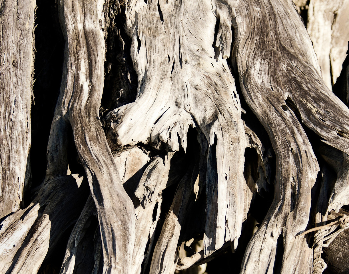 Driftwood, Florida's Lost Coast