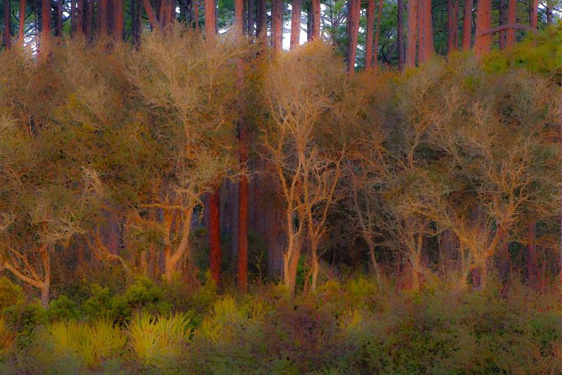 Coastal Pines around Eastpoint, Fla