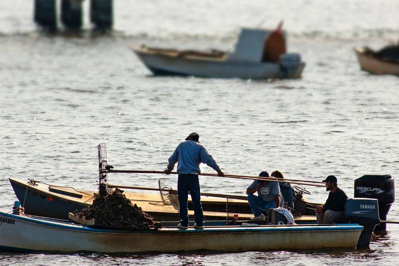 Apalachicola Bay Oystermen