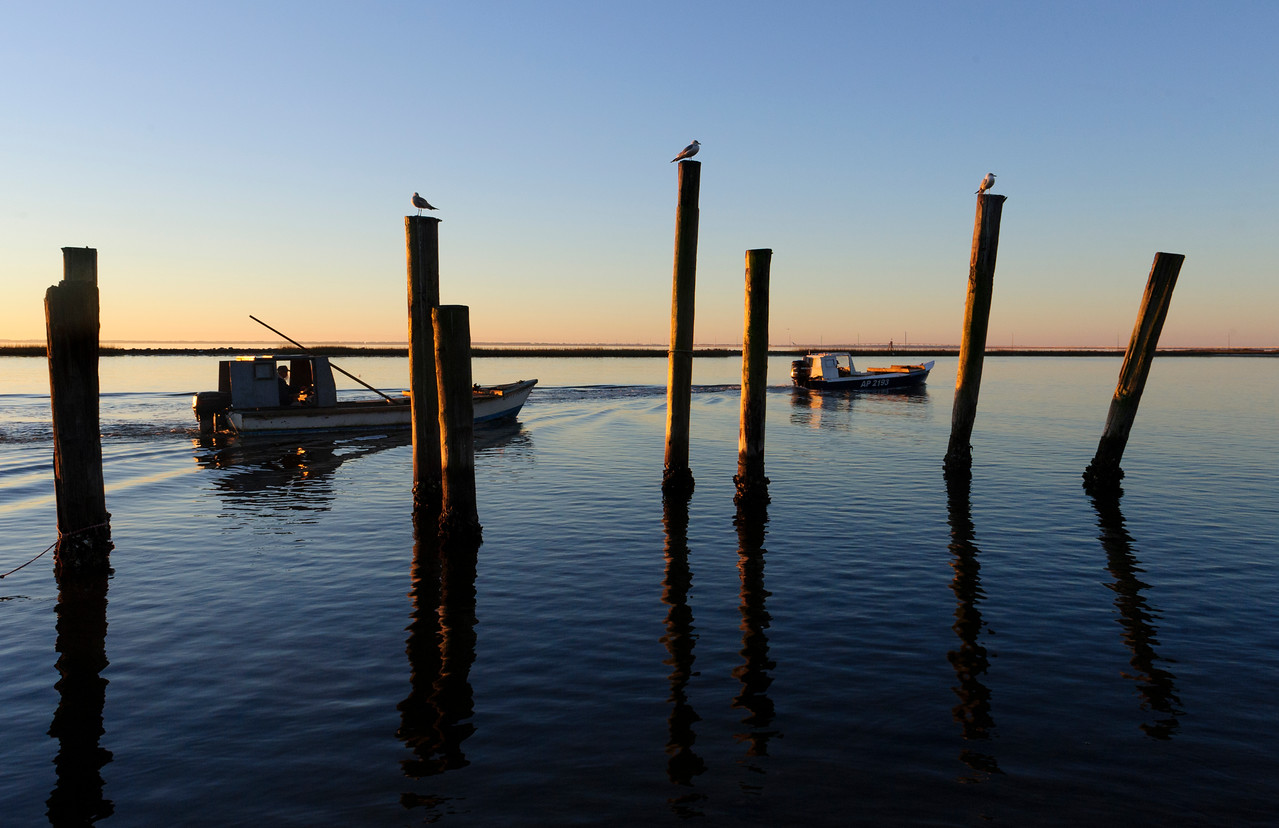 Daily parade of boats as the oystermen go out to the beds, Apalachicola Bay
