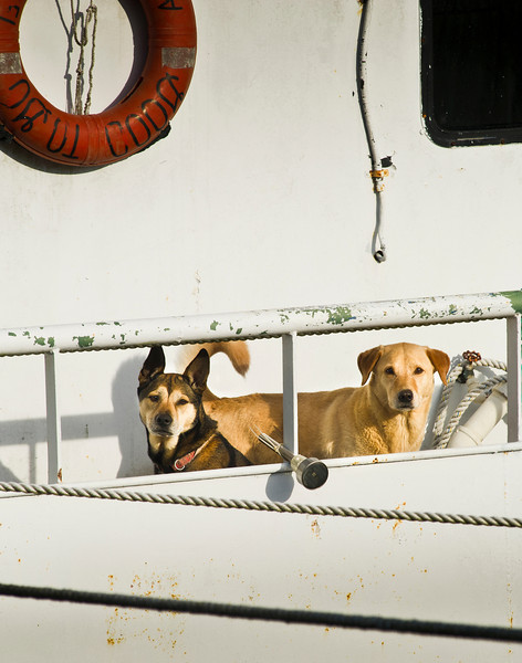 Dogs standing guard on their owner's boat