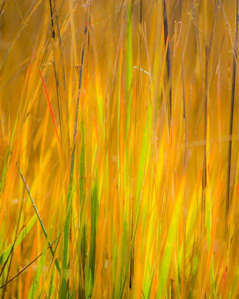 Coastal grasses near St George Island, near Apalachicola FL
