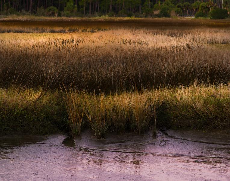 Morning Meditation on a Marsh