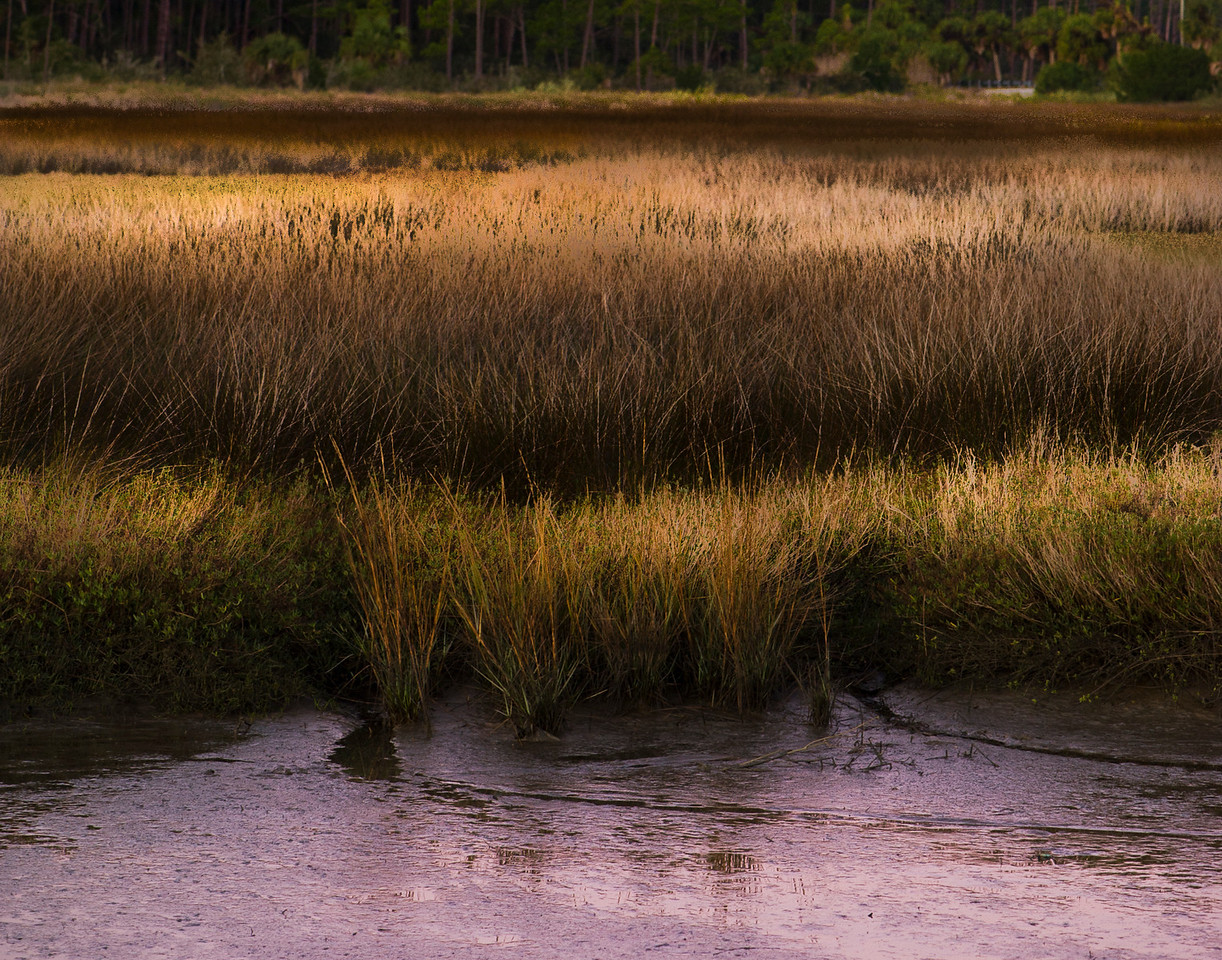 Morning Meditation on a Marsh