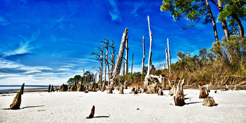 Weathered remains of a sunken forest - January 2012