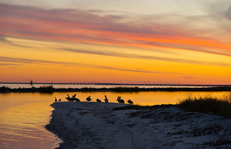 Eastpoint, Fl, Pelicans and other water fowl gather on a cold January evening