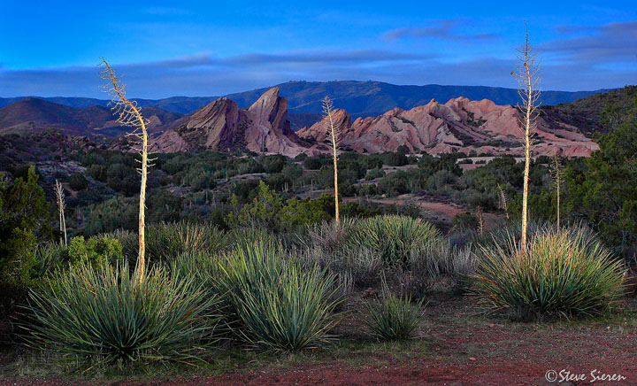 God's Candles<br /> PCT Trail Southern California<br /> <br /> The California Whipple Yucca has the nick name of God's Candles so I couldn't think of better way to make them flicker in a dusk sky.