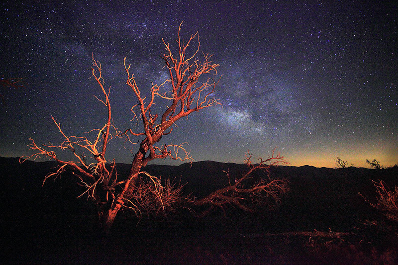 The Milky Way over a dead tree in the Domeland Wilderness, Southern Sierra.