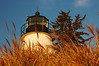 Concord Point Light Behind Grass