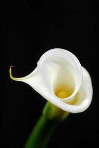 20091214_75
