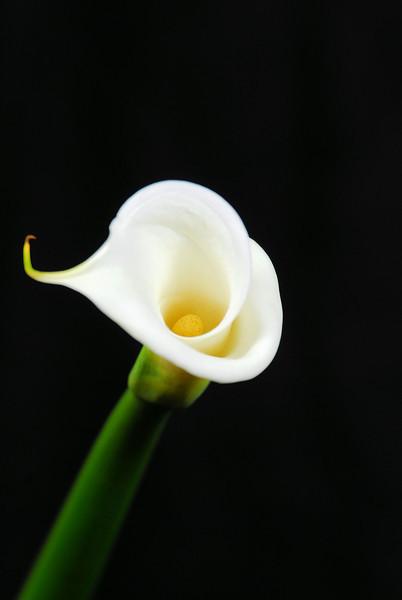 20091214_74