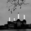 Battersea Power Station and London Plane Trees