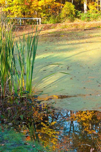 Fall pond scene