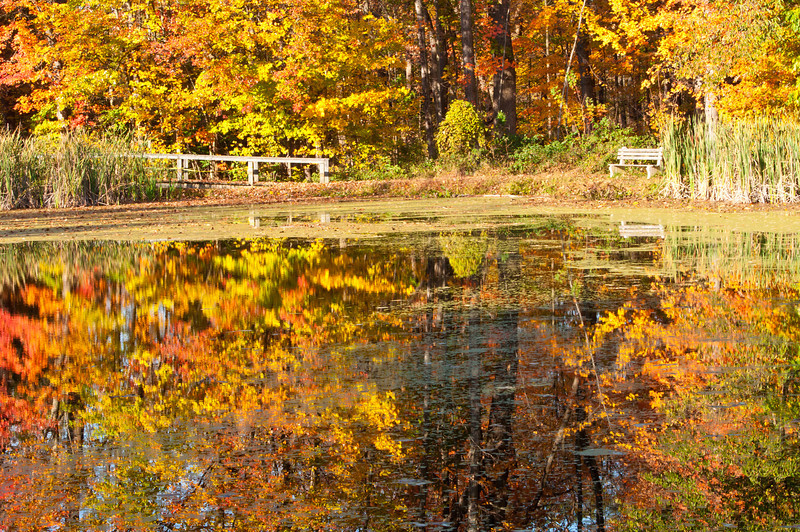 Fall colors and pond