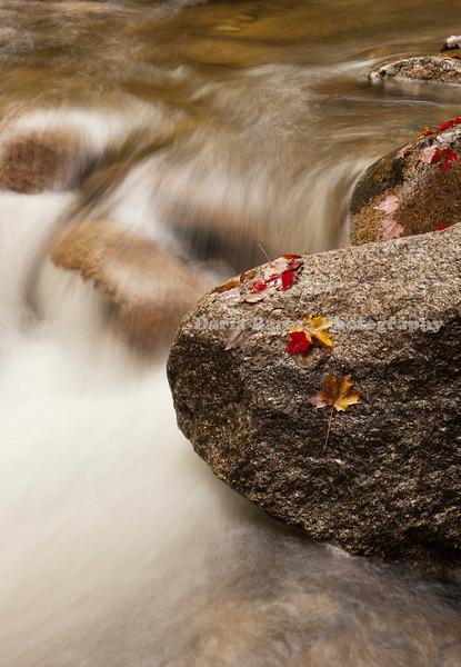 Autumn Leafs on Rocks, Sabbaday Falls, New Hempshire
