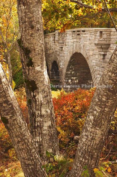 Tree and Bridge, Vermont