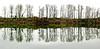 wilamette morn 28 & 29 Panorama copy copy