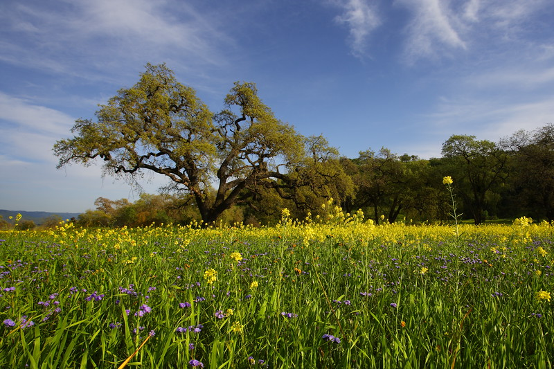 Spring in Coyote Valley