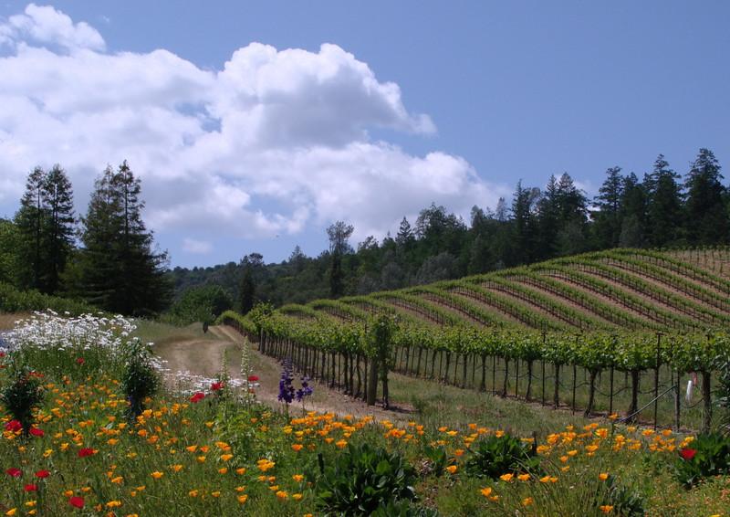 Vineyard & Flowers, Napa/Sonoma