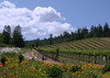 Vineyard & Flowers, Napa/Sonoma