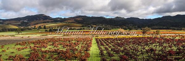 Pagan Vineyards, Kenwood
