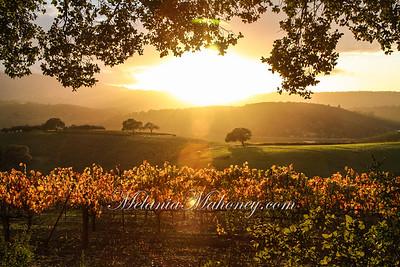 Vineyards2010 mm-4017