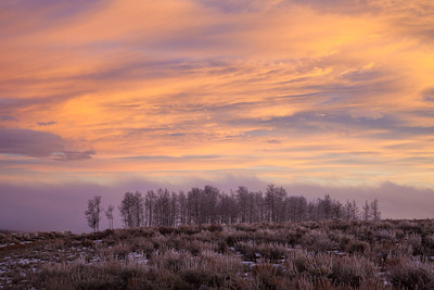 Aspens on the edge of Taylor Mountain (Utah) in the afterglow