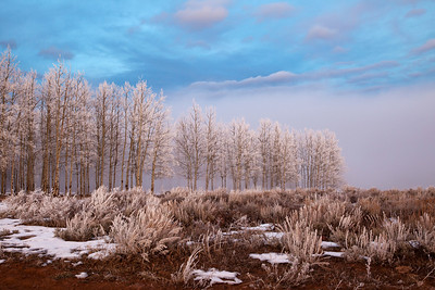 """Ice Blue Winter""...fog and rime-covered aspens on Taylor Mountain, Utah"