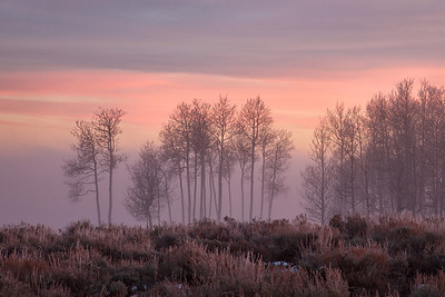 Last light on Taylor Mountain's aspens that stand like sentinels over the valley fog