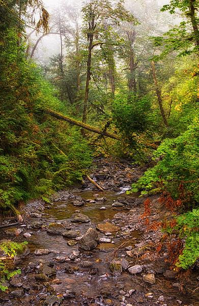 Local Seattle Area Landscape